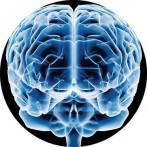 Este mayo es el Mes Europeo del Cerebro