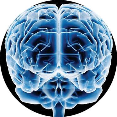 Científicos reconstruyen el cerebro humano | Top Doctors Blog