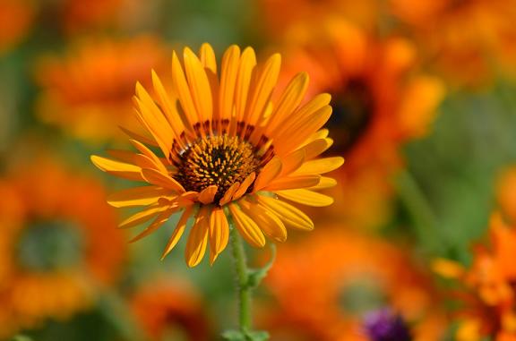Alergia al polen prevención