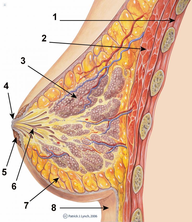 Aumento de senos con grasa corporal en Barcelona y