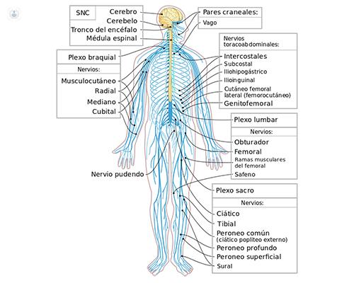 Microcirugía para las lesiones de los nervios periféricos