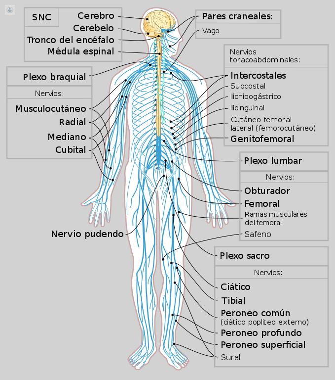 Atrapamiento nervio cubital: los mejores doctores, vídeos y ...