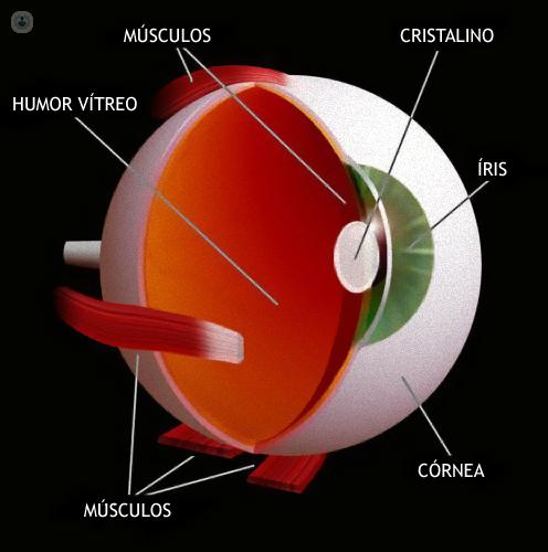 Trasplante de córnea - Top Doctors